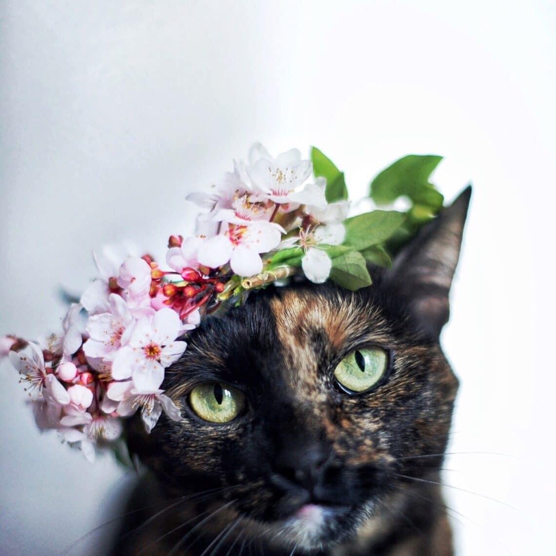 5 dolog, ami másként lenne, ha a macskák uralnák a világot