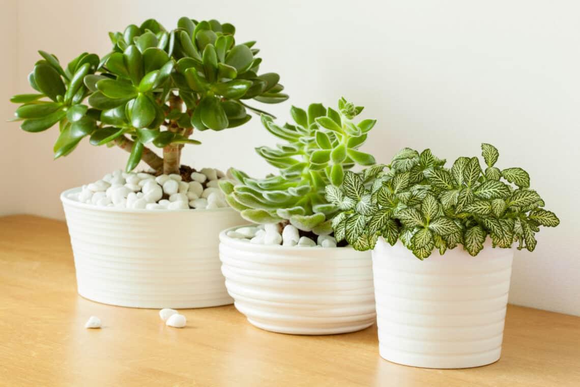 5 egzotikus növény, amik nyáron a szabadban is jól érzik magukat – a balkonodra is ültetheted őket!