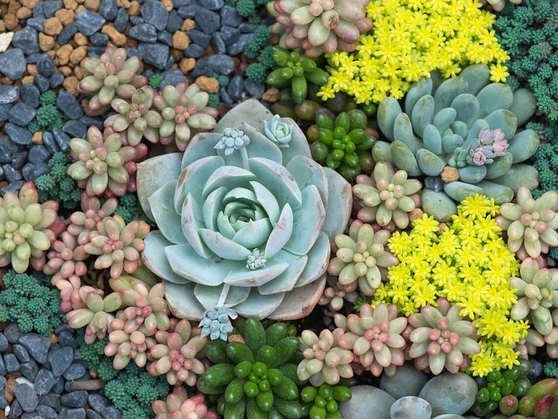 5 gyönyörű kövirózsás kert, egyedi megoldásokkal