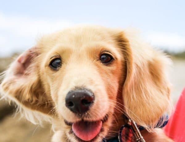 5 jel, amivel a kutyád azt üzeni: megbízik benned