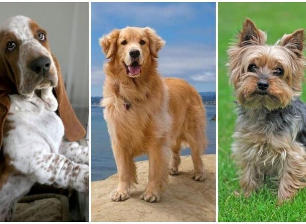 5 kutyafajta, ami tökéletes választás igazán érzékeny, érzelmes emberek mellé