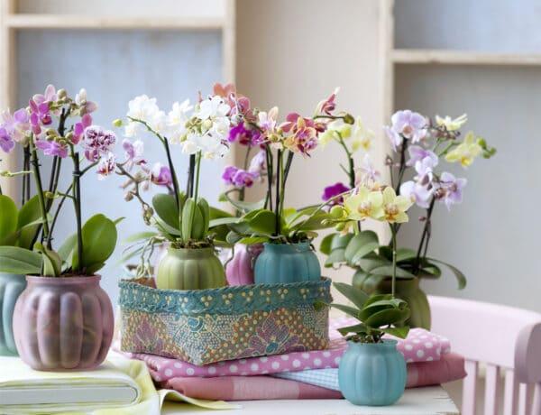 5 mutatós növény, ami boldogabbá tehet