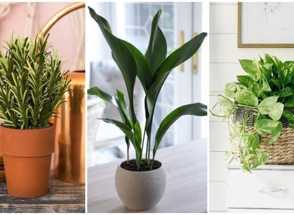 5 növény, ami imádja a konyhát, ráadásul még szép is