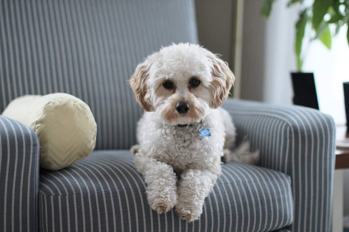 5 szuper tipp, amivel lekötheted a kutyád figyelmét, ha nem vagy otthon