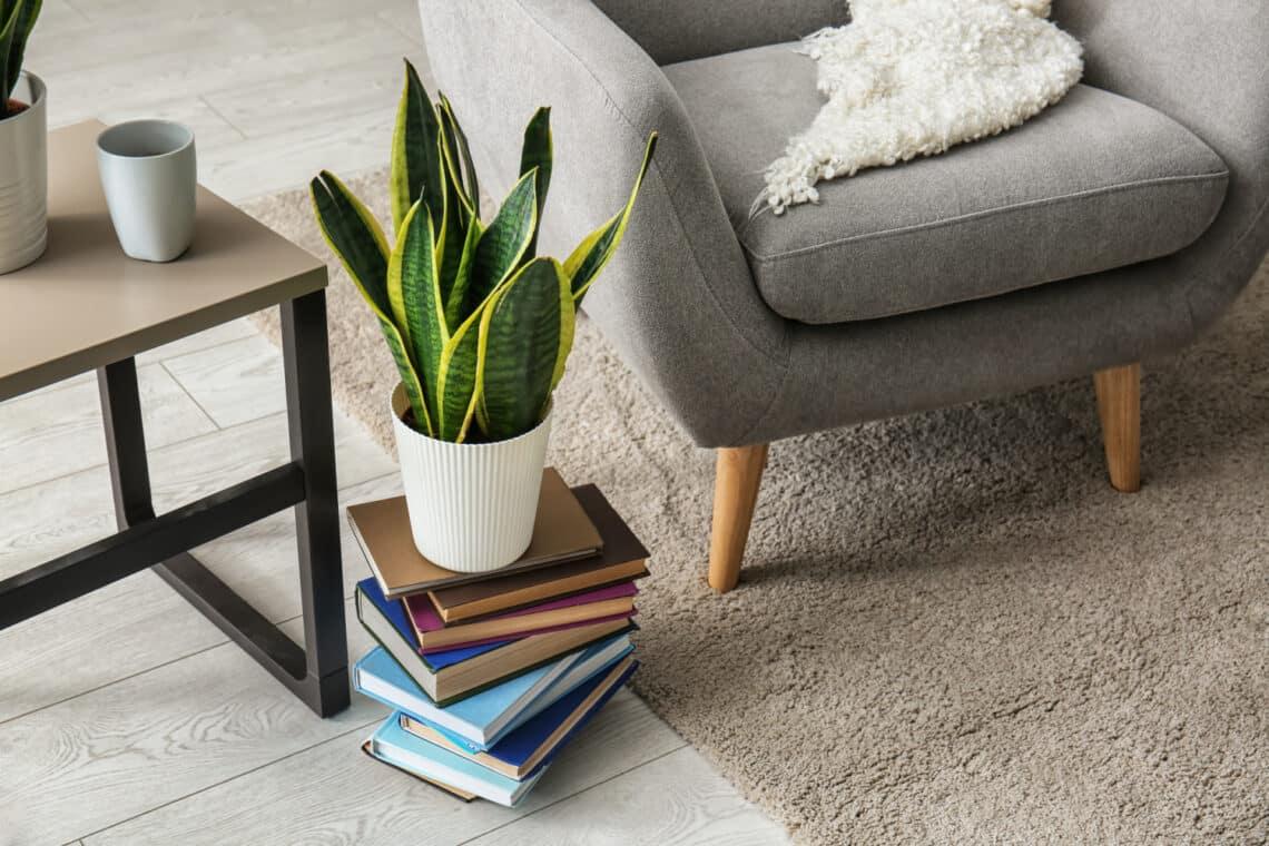 5+1 szobanövény, ami a ház legsötétebb zugában is jól elvan