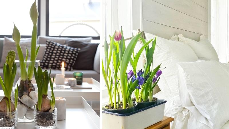 8 dekortipp tavaszi hagymásokhoz, amit imádni fogsz