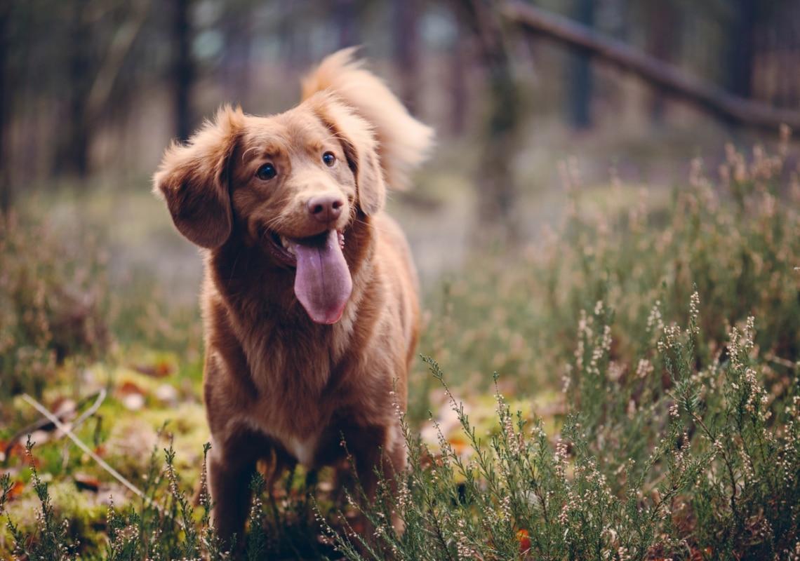 Így néz ki a világ leghosszabb nyelvű kutyája! 5 különleges kutya, akik világrekordokat döntöttek