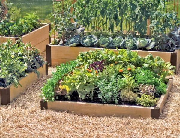 Ezért jók az emelt ágyások – válaszd őket a kertedbe!