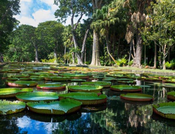 Ez a világ legnagyobb virágzó növénye – Ismerd meg a kertészeti 7 csodát
