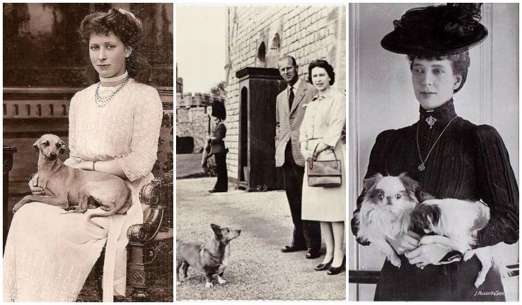 Ilyenek voltak a királyi családok kutyái: vintage képek a múltból