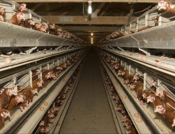 Ketreces, alternatív, vagy bio? Milyen tojást vegyél?