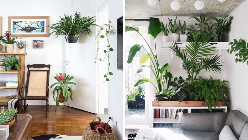 Még nincs növény a lakásodban? Ezeket a fajtákat érdemes beszerezned!