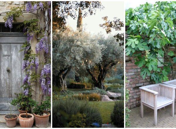 Mediterrán hangulatú kertre vágysz? 5 növény, ami  itthon is könnyedén áttelel