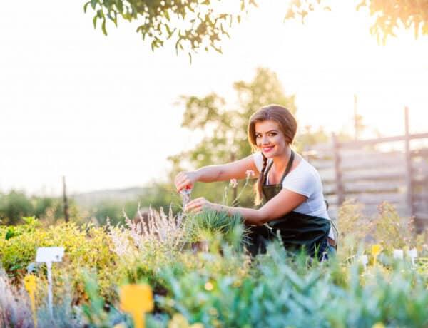 Nedves füvet nem nyírunk! 5+1 szabály amatőr kertészeknek, amit lehet még te sem tudsz