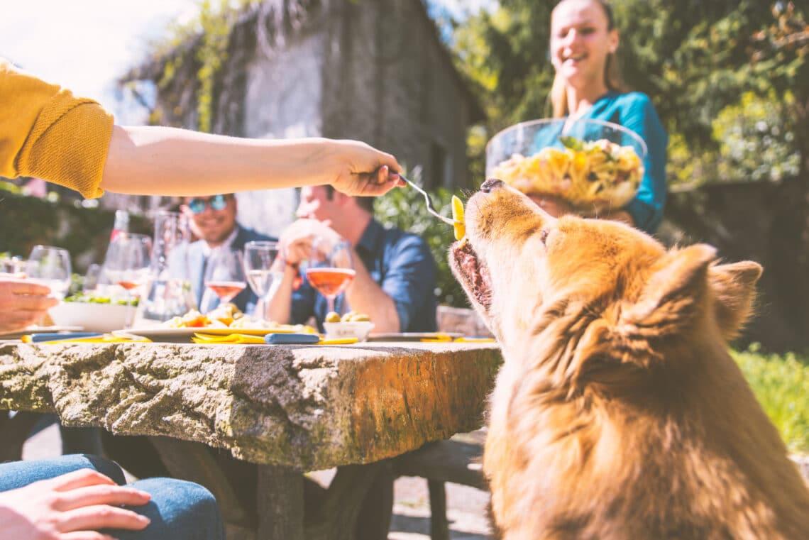 Superfood-ok, amiket a kutyusod is bátran fogyaszthat