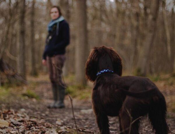 Tökéletes és olcsó őszi programok kutyával