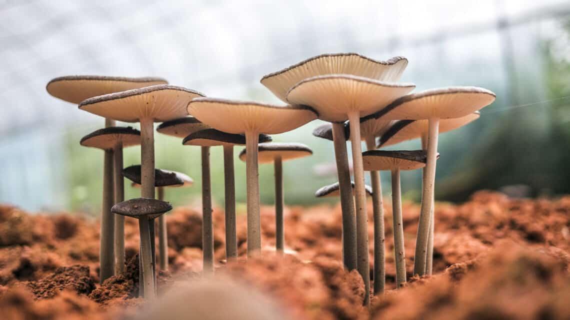 3 meghökkentő tény a gombákról – mintha egy sci-fi kelne életre, pedig valóság