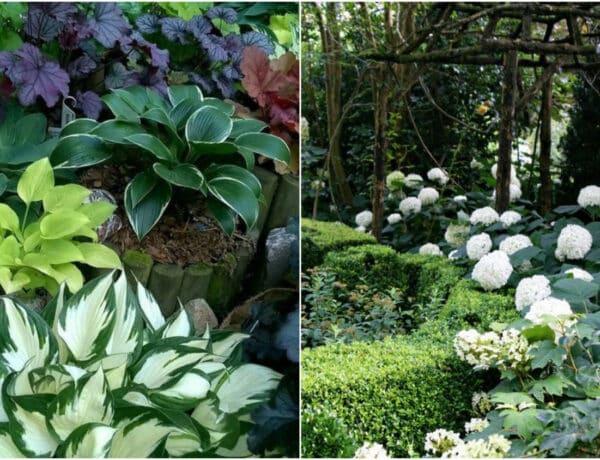 4 csodás növénypárosítás – nem csak az igényeik passzolnak, csodásan mutatnak együtt