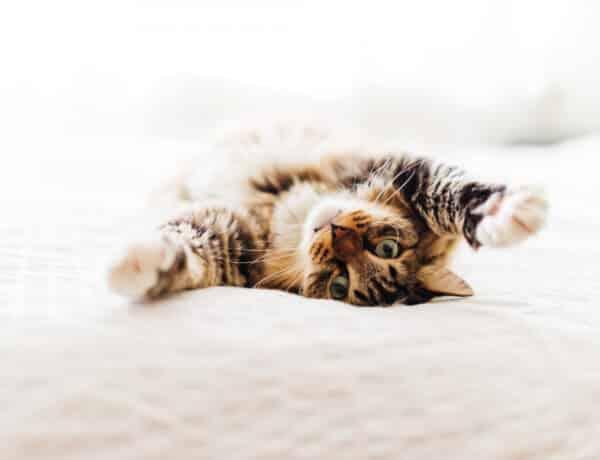 5 biztos jel, hogy a macskád megbízik benned – ezekkel adja a tudtodra