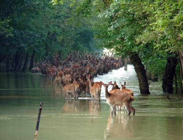 5 csodálatos erdő Magyarországon, ahol jókat kirándulhatsz