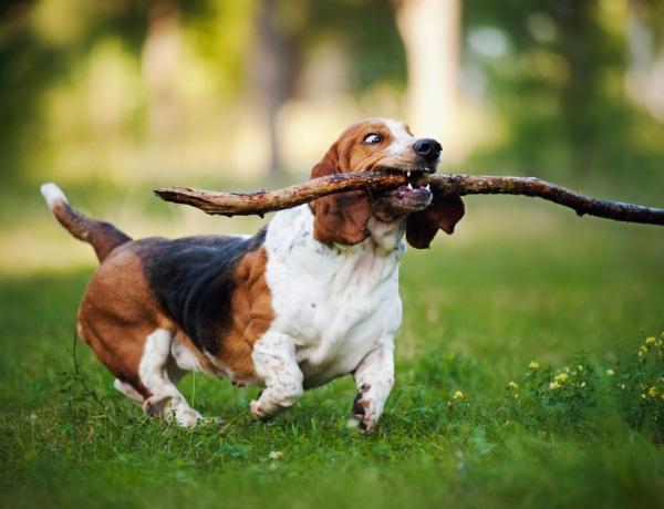 5 gondolat, amit mindenki azonnal megért, akinek kutyája van