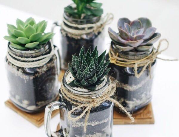 5 gyönyörű kis szobanövény, amit te is életben tudsz tartani