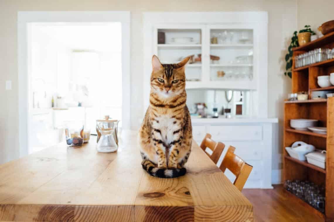 """5 jel, hogy a macskád nagyon """"megsértődött"""" rád"""
