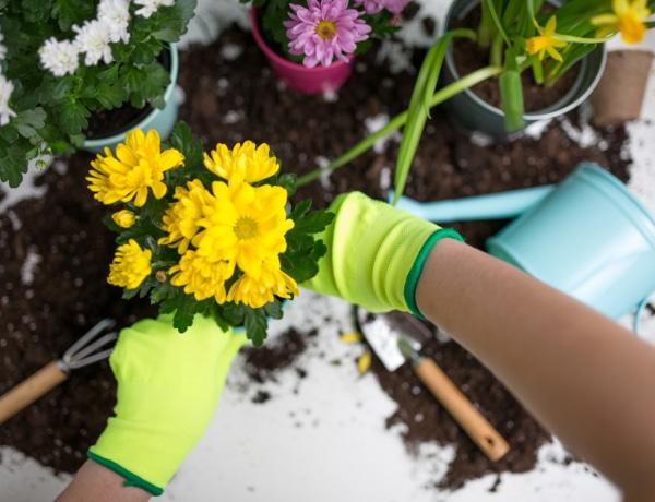 5 káprázatos elsőnek nyíló balkonvirág: ha már alig várod a tavaszt