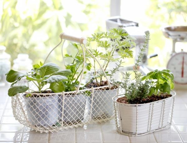 5 tipp a konyhakerti fűszernövények életben tartásához