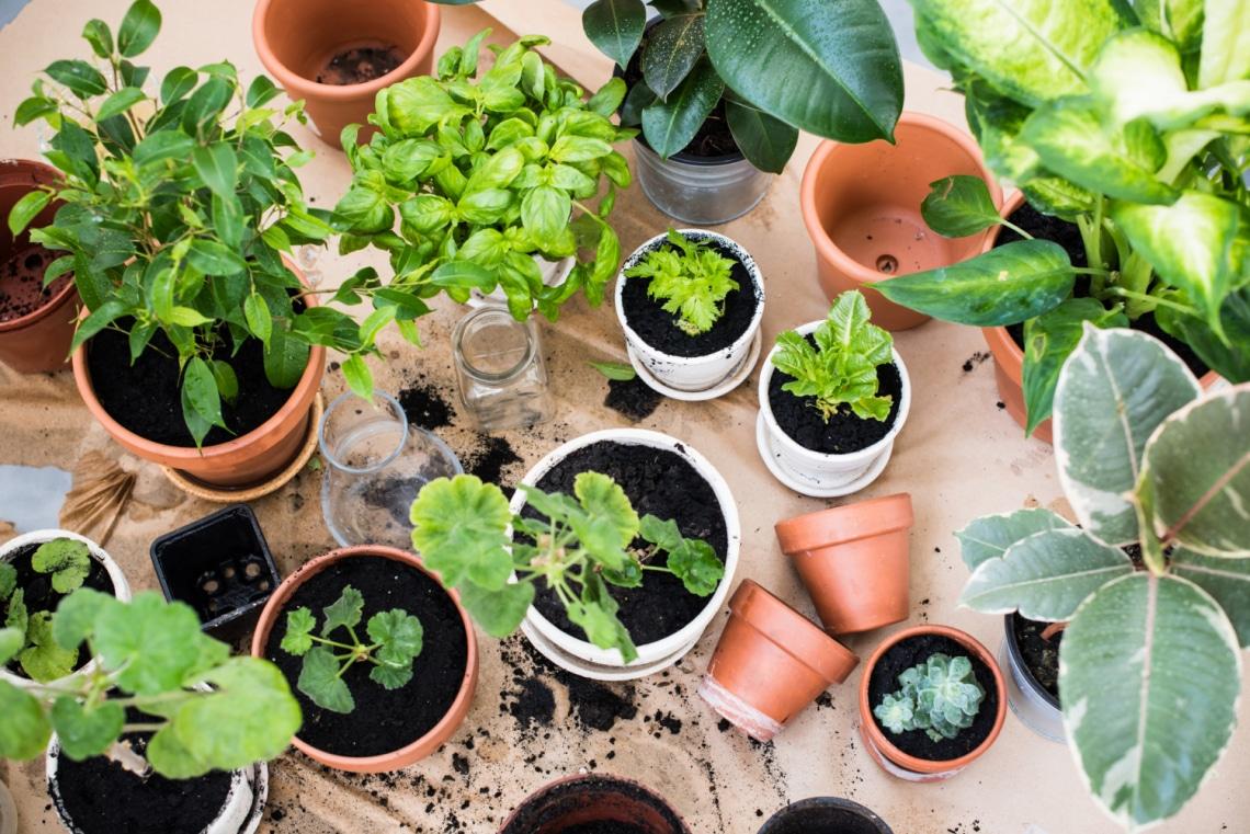 5 zöldég és 5 fűszernövény, amit sikeresen termeszthetsz balkonládában