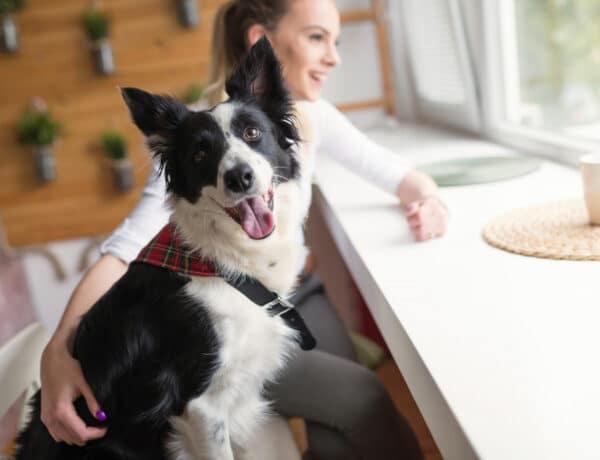 5+1 tárgy, ami megtalálható a lakásodban, és életveszélyes a kutyádra