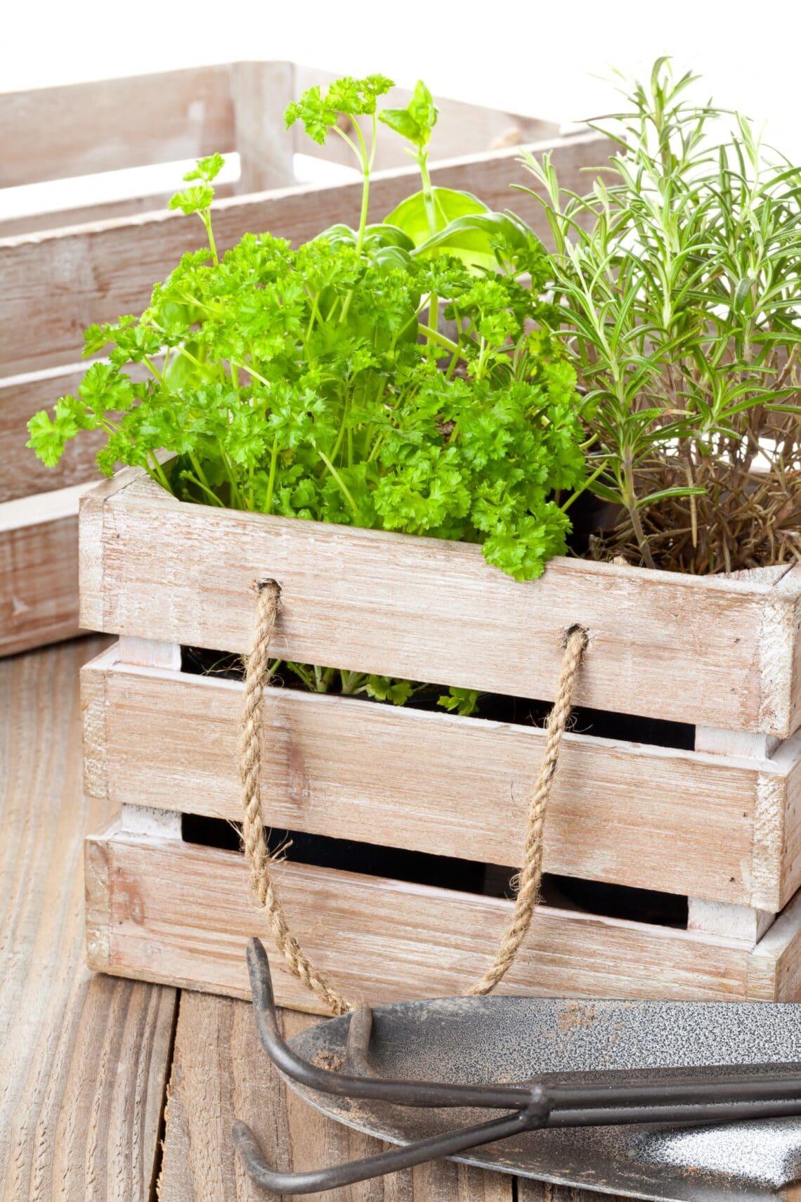 6 fűszernövény, ami csodásan hat az egészségedre