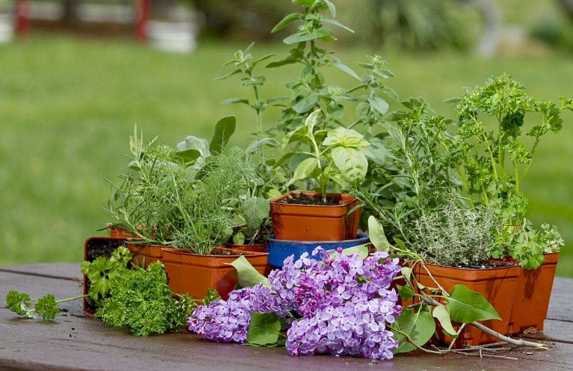 6 fűszernövény, amit nyugodtan elültethetsz kinn: a telet is kibírják