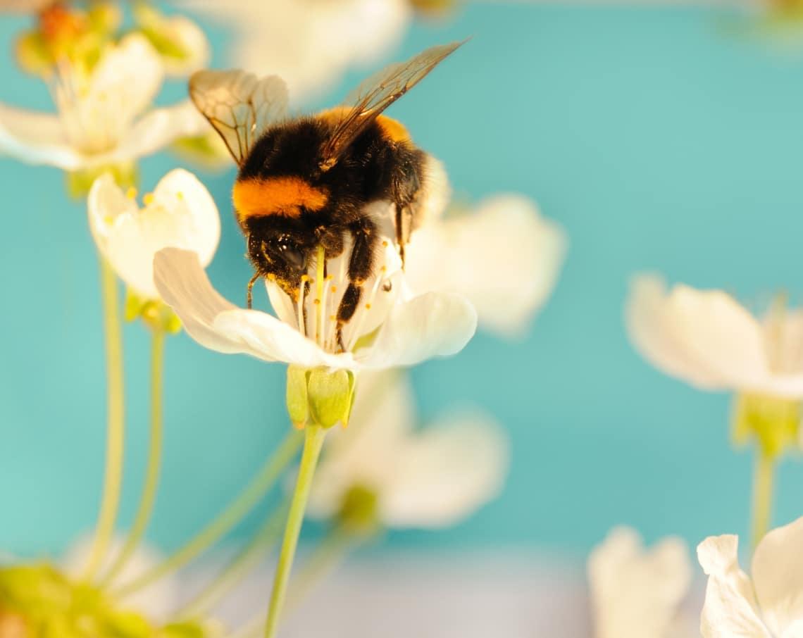 6 növény, ami mágnesként vonzza a kertedbe a rovarokat