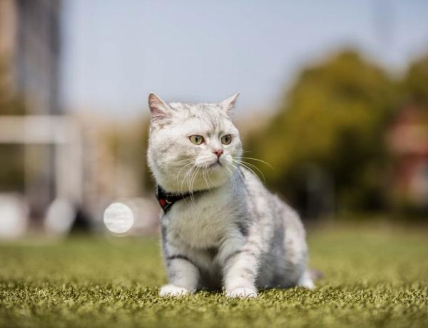 7 hatalmas tévhit a cicákról, amiben sokan hisznek