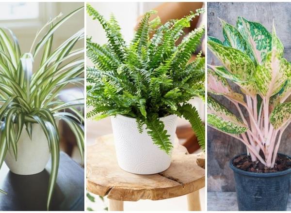 7 növény, amely a legjobban tisztítja a levegőt az otthonodban – A NASA szakértői szerint