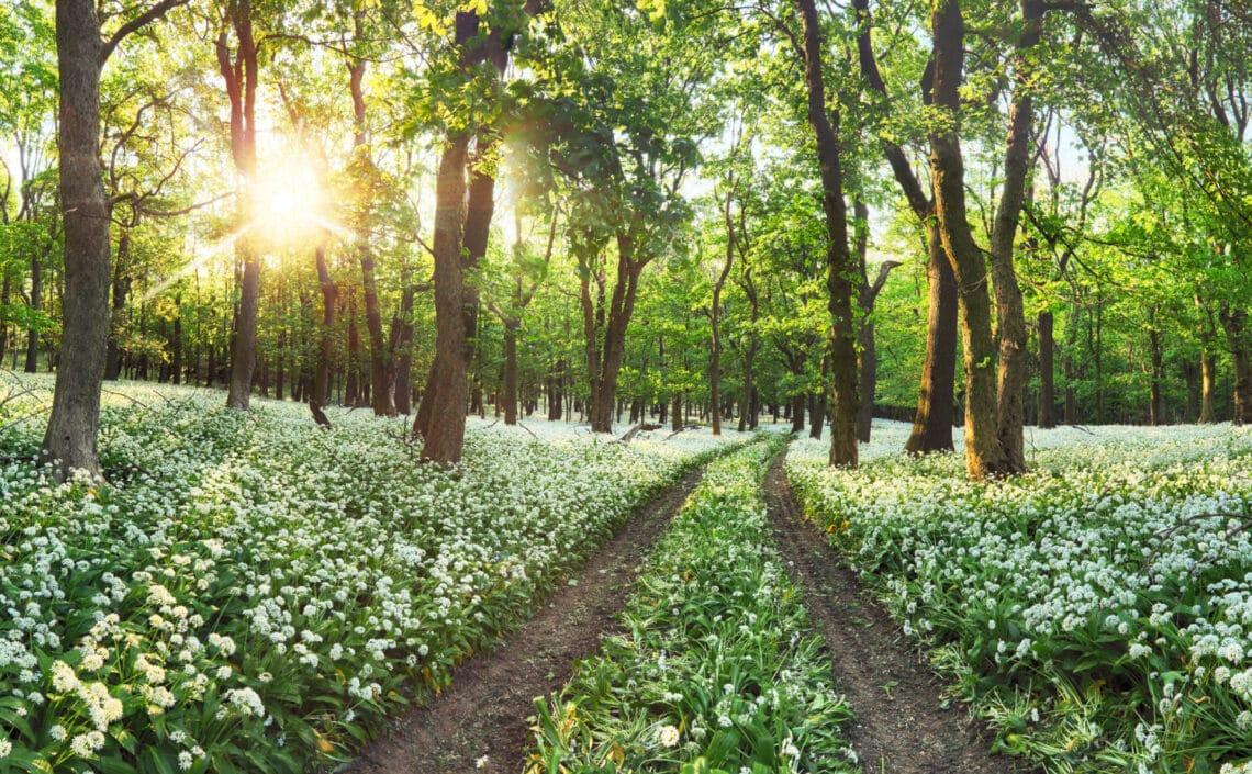 7 varázslatos magyar táj, amit tavasszal látni kell