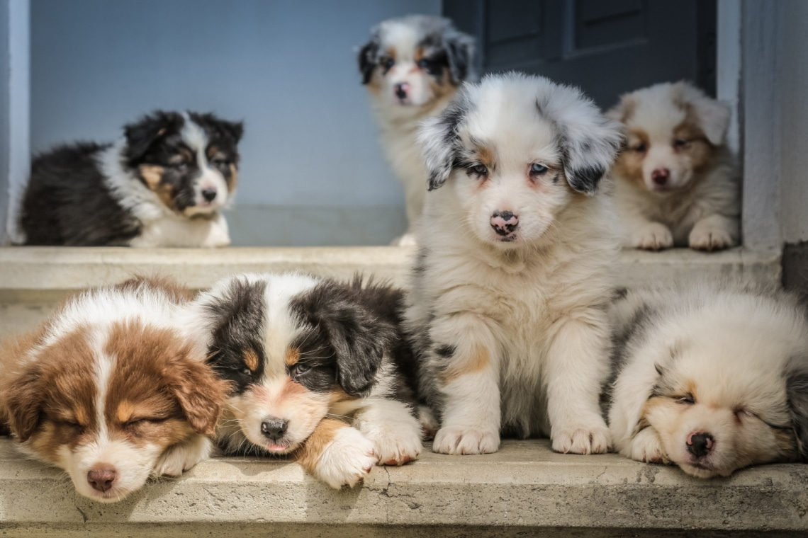 Top 10 legegészségesebb kutyafajta: hosszú évekig boldogítják a családot