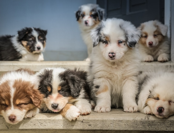 Top 10 legegészségesebb kutyafajta: hosszú évekig boldogítják a gazdit