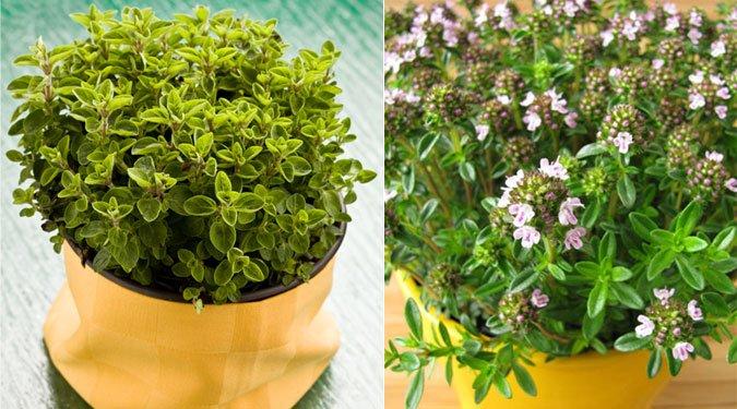 A 15 legnépszerűbb fűszernövény