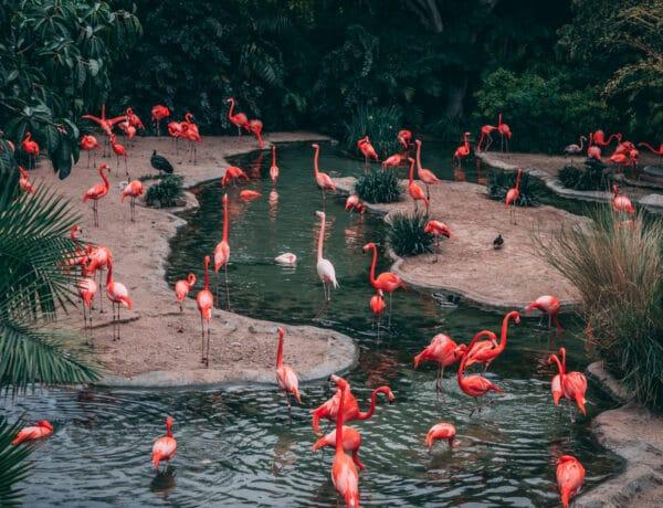 A Pentagon elismerte az ufók létezését, a flamingók pedig szociális életet élnek. 10 fontos fejlemény, amit elhanyagoltunk a járvány miatt