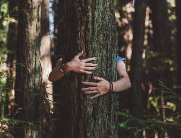 A fák ölelése nem csak egy légből kapott ötlet: gyógyít és stressz mentesít ez az egyszerű rutin