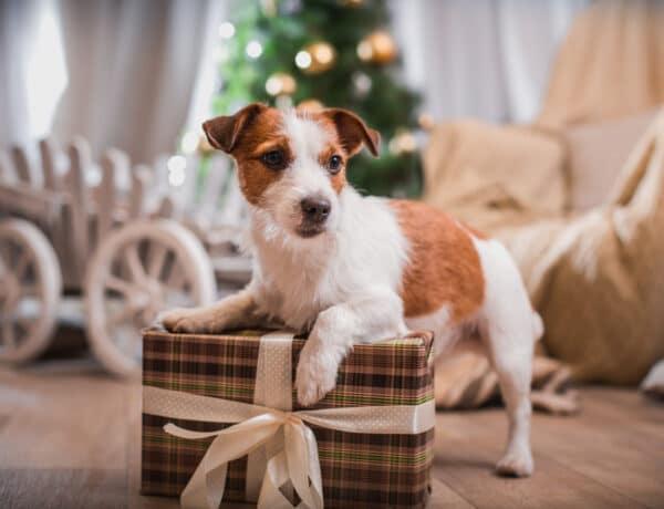 A kis kedvenc se maradjon ki! DIY karácsonyi ajándékok a kutyusodnak