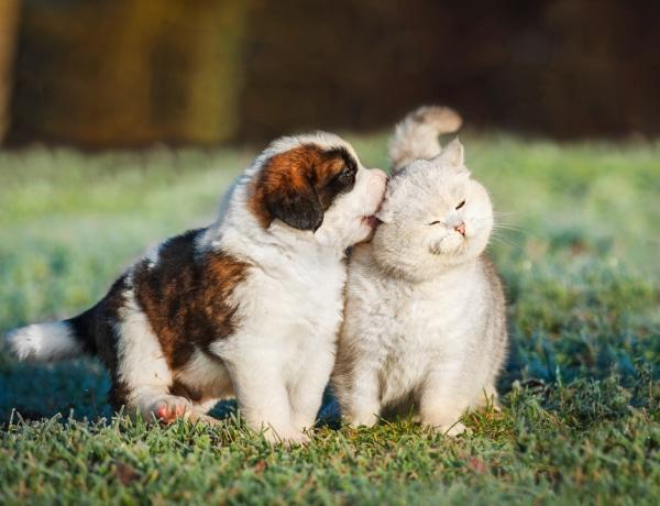A kutyád vagy a macskád örül neked jobban?