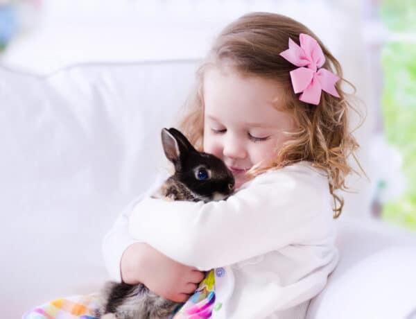 A legjobb háziállatok a kicsik számára – a kutyán és a macskán kívül