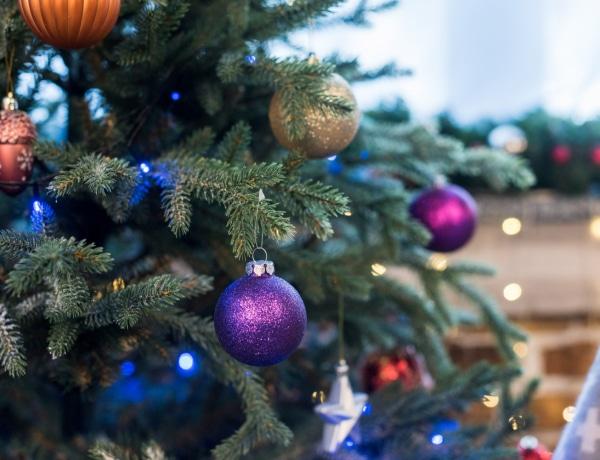 A legszebb karácsonyfa típusok – Mire érdemes figyelni a vásárlásnál?