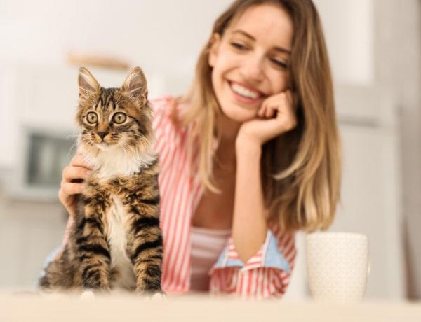 A macskák született empaták, akik gyógyítják a lelked