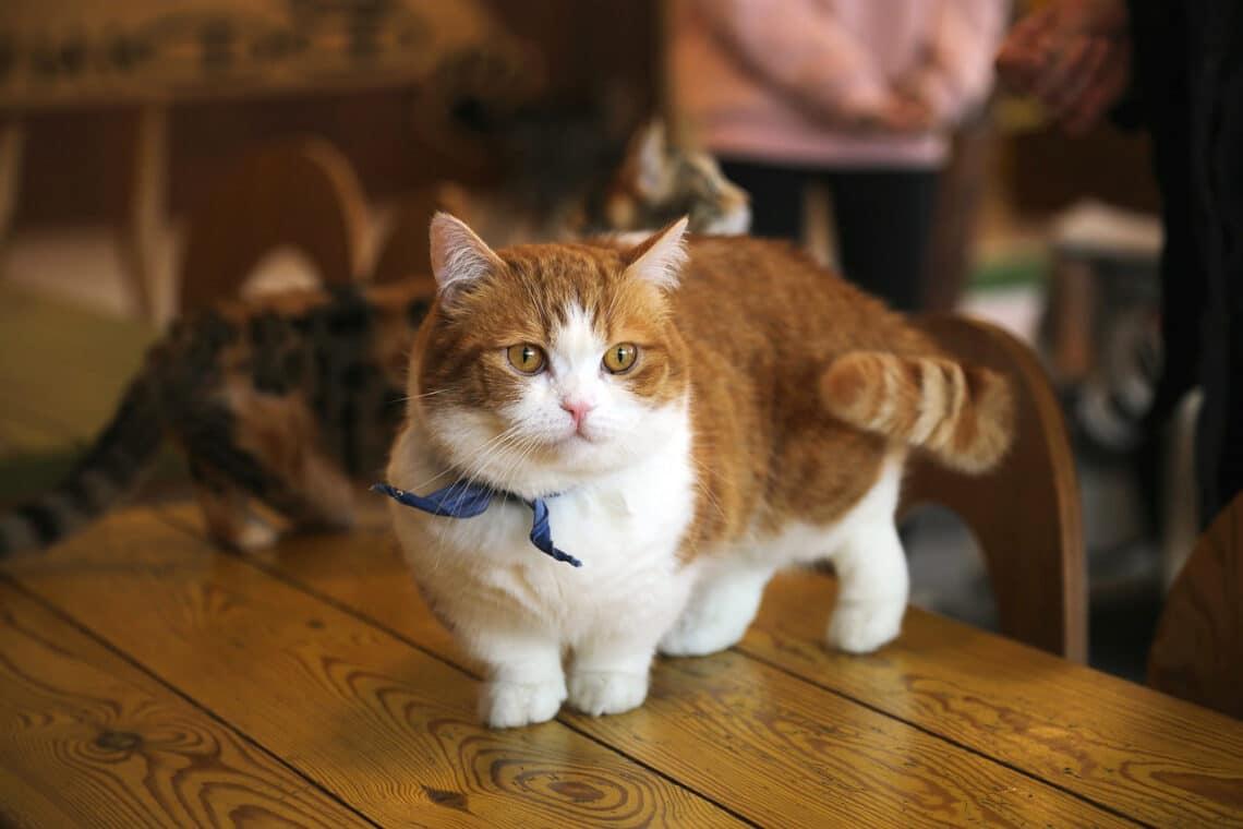 A világ 5 leggyönyörűbb macskafajtája – te melyiket fogadnád el?