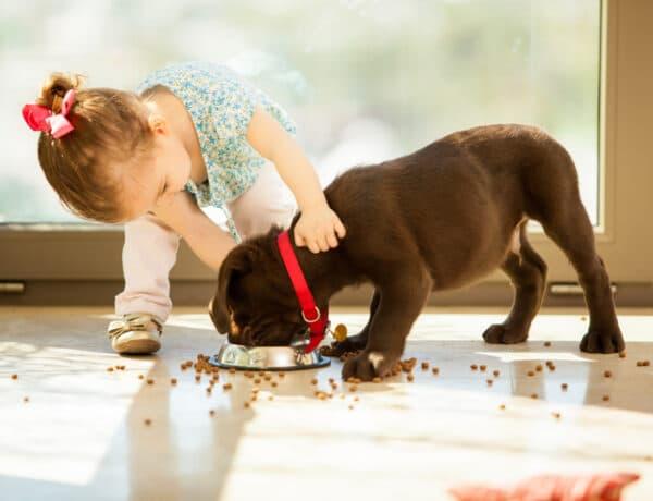 Anyu, veszel nekem egy kiskutyát? Szakértő válaszol: mikor kapjon háziállatot a gyerek