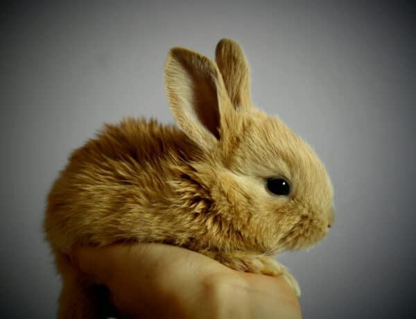 Az állatokon tesztelt sminkek nyomában: mi történik valójában a laboratóriumban?